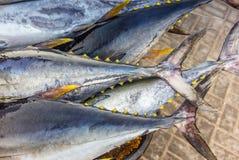 新鲜的黄色飞翅金枪鱼抓住在鱼市上在马斯喀特- 3 库存图片
