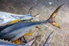 新鲜的黄色飞翅金枪鱼抓住在鱼市上在马斯喀特- 2 免版税库存图片