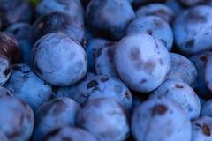 新鲜的黑暗的紫色李子 顶视图背景 免版税库存图片