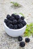 新鲜的黑莓 库存图片