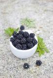新鲜的黑莓 免版税库存照片