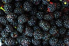 新鲜的黑莓 库存照片