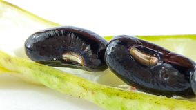 新鲜的黑豆 免版税库存图片
