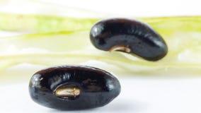 新鲜的黑豆 库存图片