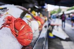 新鲜的龙虾在鱼市上 图库摄影