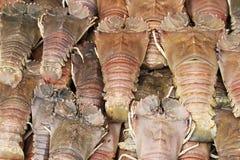新鲜的龙虾 免版税图库摄影
