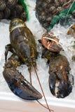 新鲜的龙虾 库存照片
