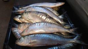 新鲜的整个鱼 库存照片