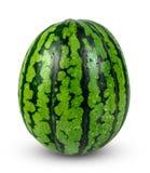 新鲜的整个绿色西瓜 背景查出的白色 免版税库存图片