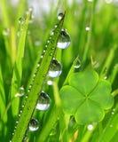 新鲜的满地露水的绿草 图库摄影