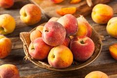 新鲜的水多的有机黄色桃子 免版税库存图片