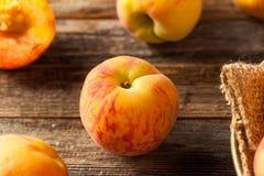 新鲜的水多的有机黄色桃子 免版税库存照片