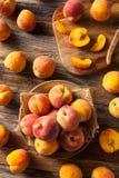 新鲜的水多的有机黄色桃子 免版税图库摄影