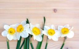 新鲜的黄水仙或水仙在木背景开花 库存照片