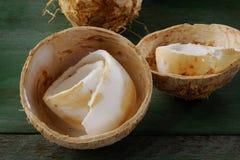新鲜的年轻椰子 图库摄影