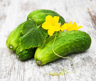 新鲜的黄瓜 免版税库存照片