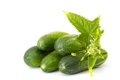 新鲜的黄瓜 免版税库存图片