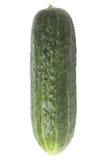 新鲜的黄瓜 免版税图库摄影
