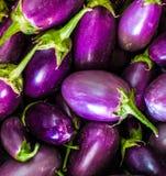 新鲜的紫罗兰色Brinjal 免版税库存图片