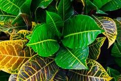 新鲜的绿色叶子本质上 免版税图库摄影