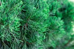 新鲜的绿色叶子本质上 免版税库存图片