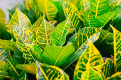 新鲜的绿色叶子本质上 库存照片