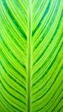 新鲜的绿色叶子特写镜头  免版税库存照片