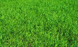 新鲜的绿色后院 免版税库存照片