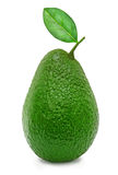 新鲜的绿色成熟鲕梨 免版税图库摄影