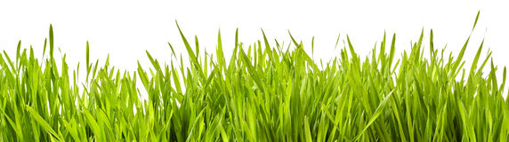 新鲜的绿色春天草全景横幅  库存照片