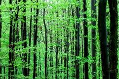 新鲜的绿色森林 免版税图库摄影