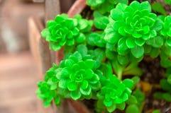 新鲜的绿色植物 库存照片