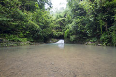 新鲜的绿色瀑布 库存图片