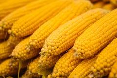 新鲜的黄色玉米菜 免版税库存图片