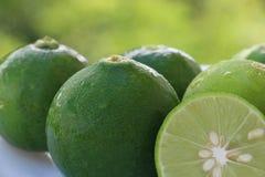 新鲜的绿色石灰 免版税图库摄影