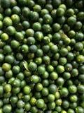 新鲜的绿色石灰 图库摄影