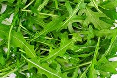 新鲜的绿色芝麻菜 免版税图库摄影