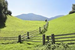 新鲜的绿色草甸,南提洛尔,意大利 免版税库存图片