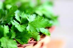 新鲜的绿色荷兰芹留下照片 防护黄酮类化合物的抗氧剂的富有的来源 荷兰芹草本背景 特写镜头 免版税库存图片