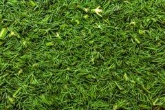 新鲜的绿色莳萝 库存照片