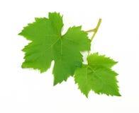 新鲜的绿色葡萄叶子 免版税库存照片