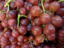 新鲜的紫色葡萄 库存图片