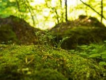 新鲜的绿色青苔 免版税库存照片