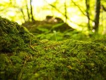 新鲜的绿色青苔 免版税库存图片