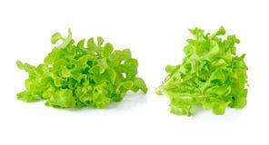 新鲜的绿色莴苣叶子 库存图片