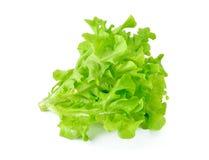 新鲜的绿色莴苣叶子 免版税图库摄影