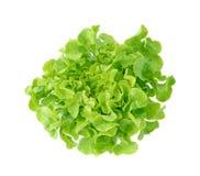 新鲜的绿色莴苣叶子 图库摄影