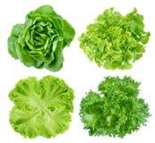 新鲜的绿色莴苣叶子 免版税库存照片