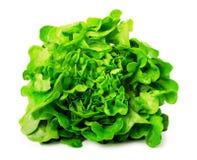 新鲜的绿色莴苣沙拉 免版税库存图片