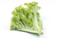 新鲜的绿色莴苣 免版税图库摄影